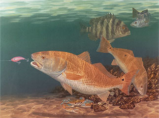 """""""Sweet Deal"""" by fish artist Randy McGovern"""