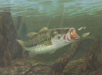 """""""Going for a Spin"""" by fish artist Randy McGovern"""