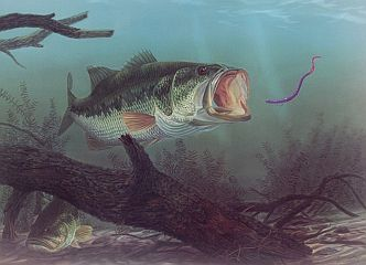 """Lunker Lunch"" by fish artist Randy McGovern"