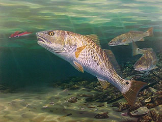 """""""Seeing Red"""" by fish artist Randy McGovern"""