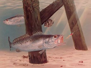 """Speckled Trout VS. Sparkled Beetle"""