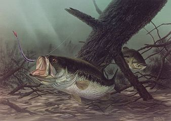 """The Hideout"" by fish artist Randy McGovern"
